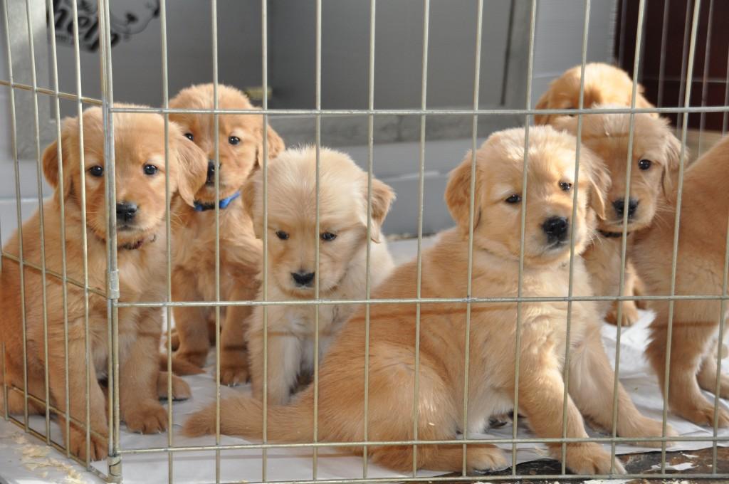 COPE Future Service Dogs