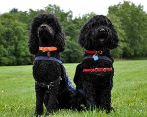 cope-service-dogs