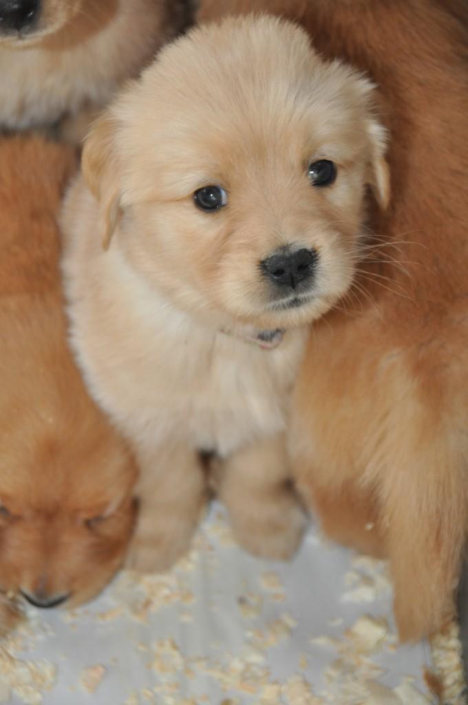 COPE Service Puppy
