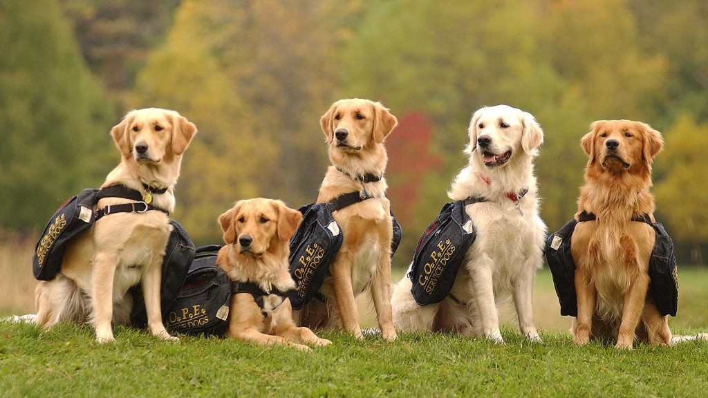 Image result for cope service dogs