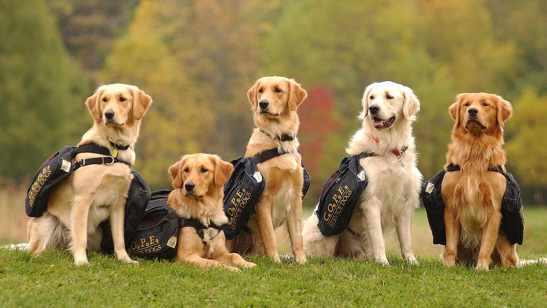 COPE Service Dogs