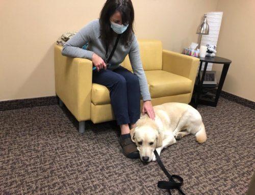 Trooper the Facility Dog (Orillia Matters, Nov. 7, 2020)